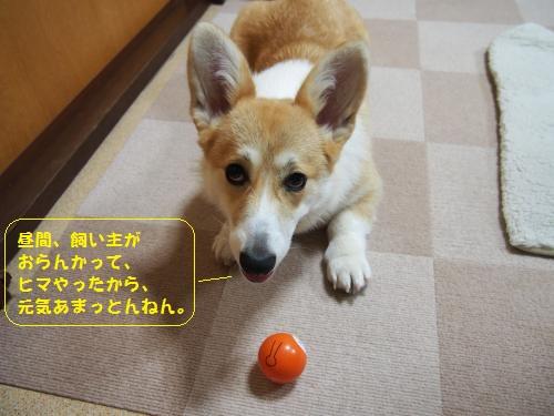 どきんちゃん2