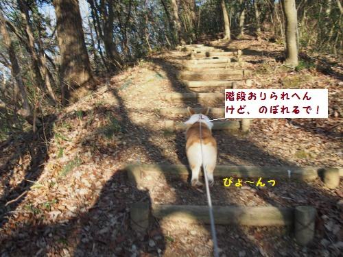 山道散歩すたーと