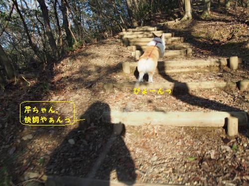階段ぴょーん