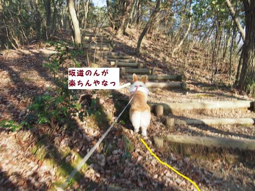 山道散歩つづく
