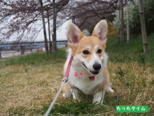 ちっち~タイム1