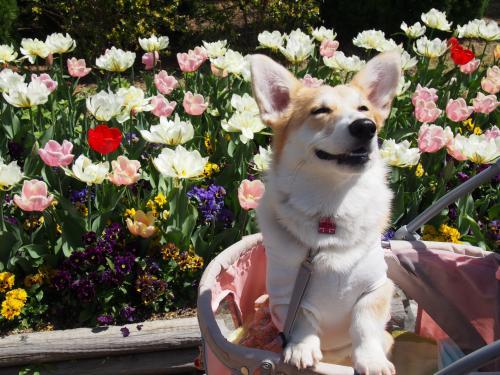 春のかおりっていぃなぁ~