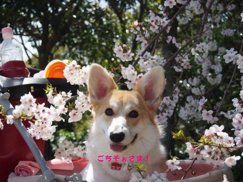 ごちそぉさま、桜さん