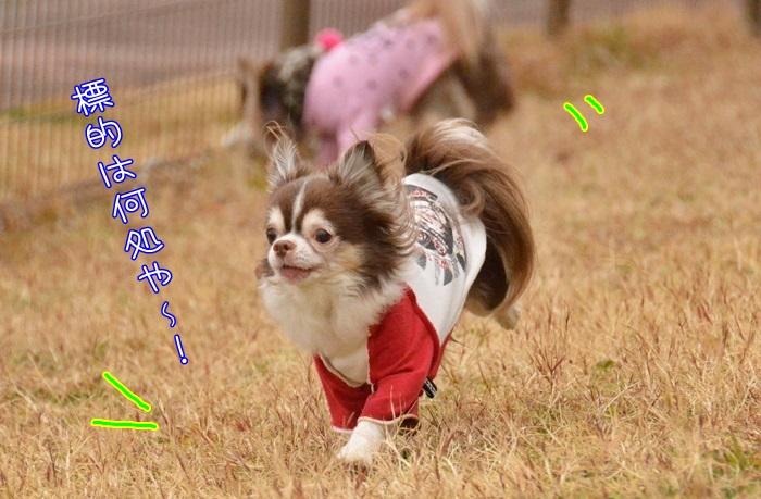 DSC_6204_201603102140389a0.jpg