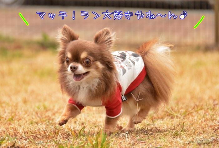 DSC_6212.jpg