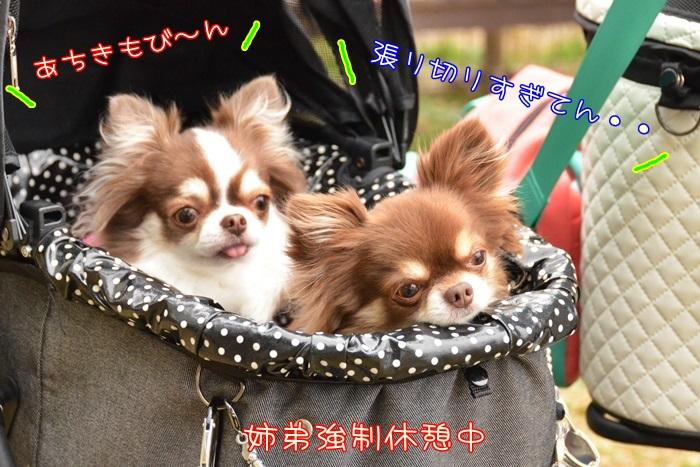 DSC_6334_20160309214038e0f.jpg