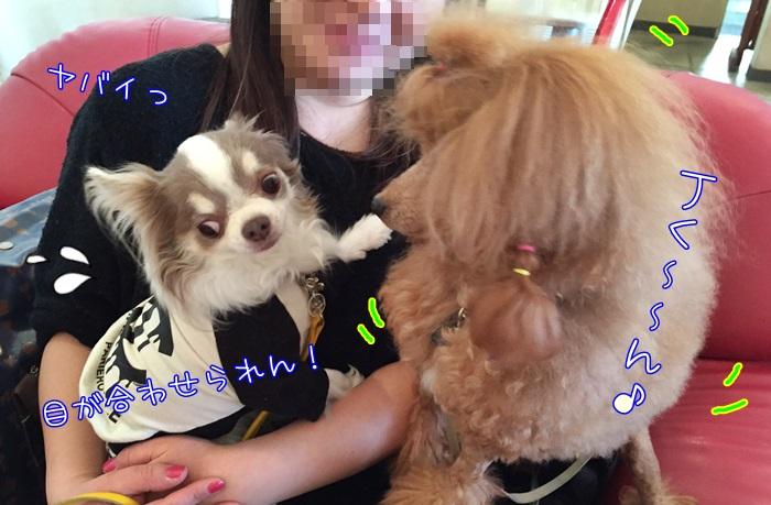 image11_20160316221012ab8.jpg