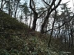 DSC_1371_2016010321380343b.jpg