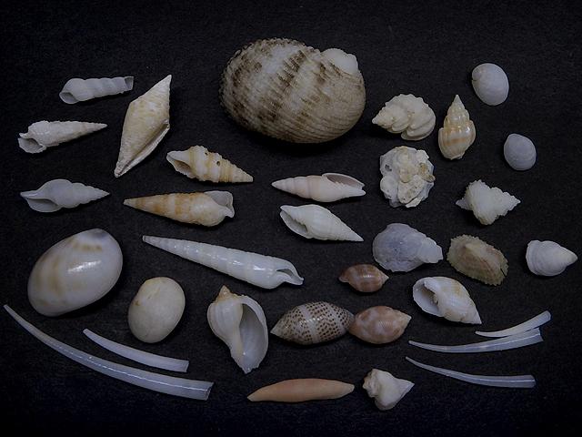砂掘り結果160221-002