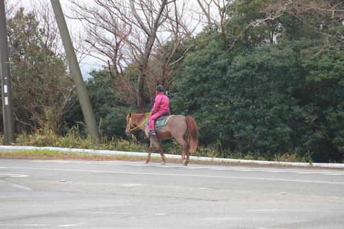 awajijjii-0118-1758.jpg