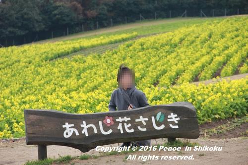 awajijjii-0118-1771.jpg
