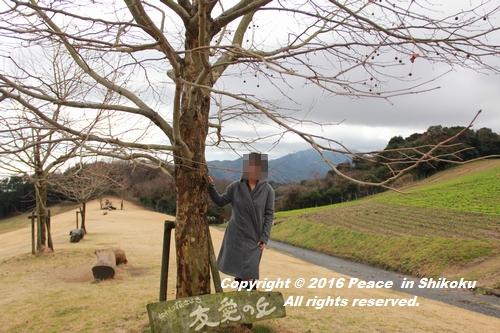 awajijjii-0118-1779.jpg