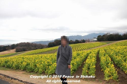 awajijjii-0118-1824.jpg