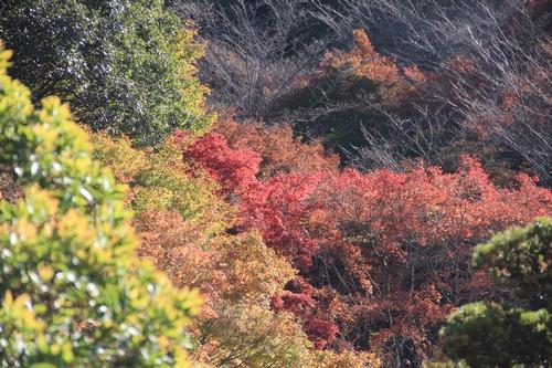 kouyou-1116-9230a.jpg