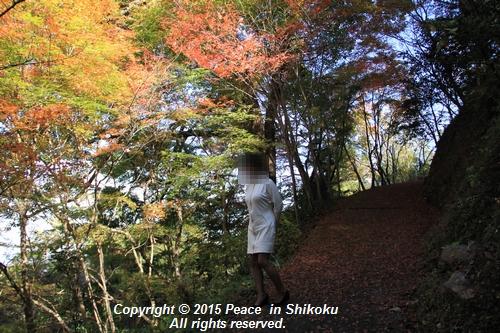 kouyou-1116-9233a.jpg