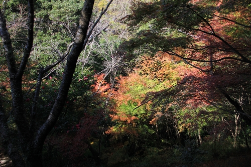 kouyou-1116-9239a.jpg