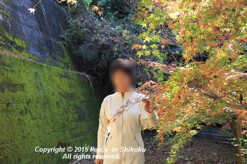 kouyou-1116-9252a.jpg