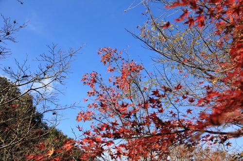 kouyou-1116-9387.jpg