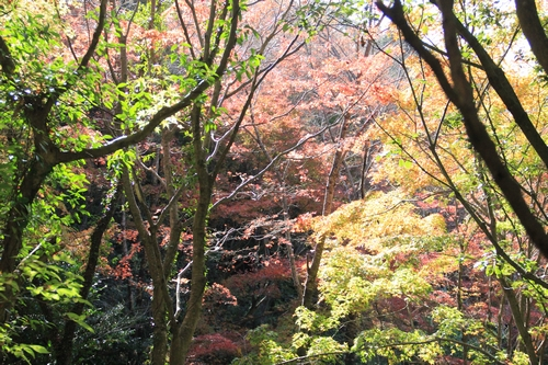 kouyou-1116-9394.jpg