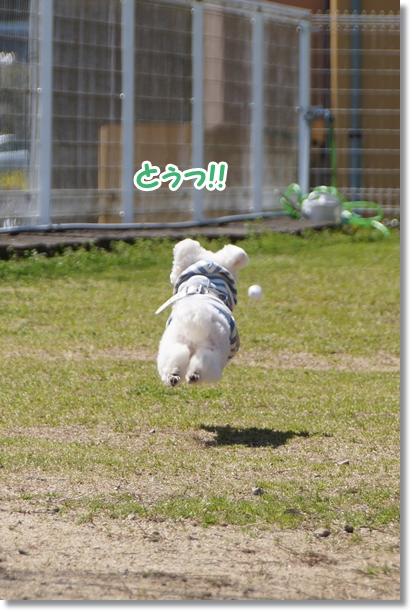 キレイにジャンプ!!1