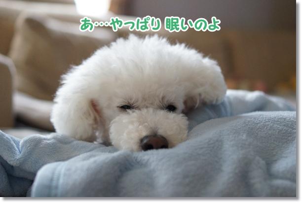やっぱり眠い4