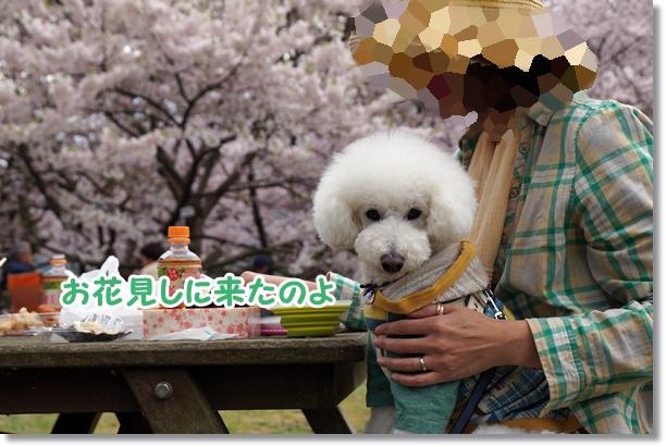 お花見♪1