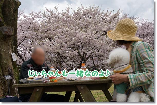 お花見♪2