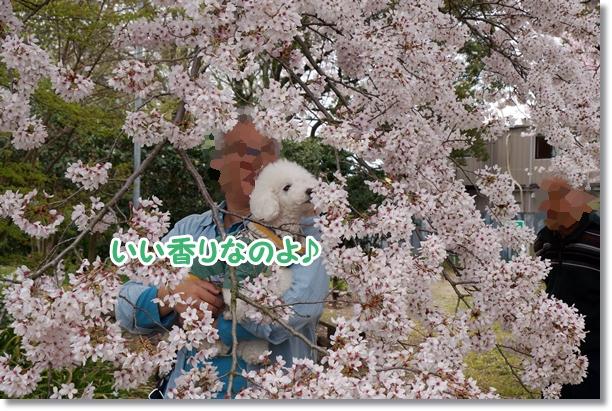 お花見♪5