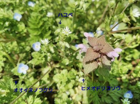 oYhFN6UETqpfBmM1458797635_1458797900.jpg