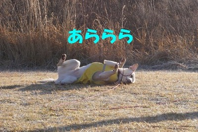 DSC04951.jpg