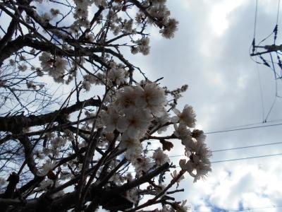 DSCN1832.jpg