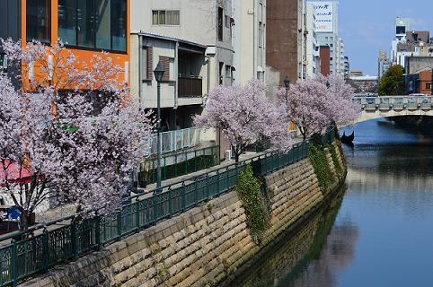 桜2016a