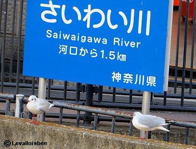 海から1km半の幸川は潮の香りREVdownsize
