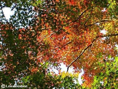 樹冠は赤橙緑のステンドグラスREVdownsize