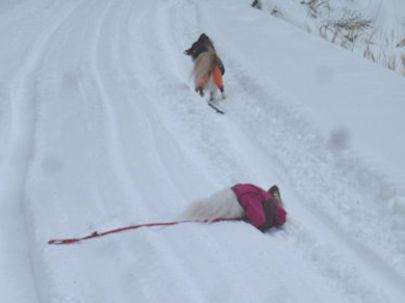 雪の中のりん