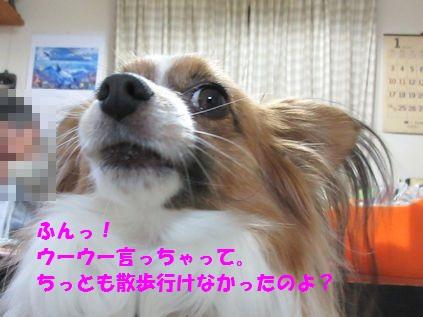 IMG_0076_20160222213827e1e.jpg