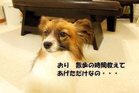 _MG_3733.jpg
