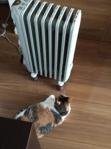 ヒーターにがぶり寄りの猫