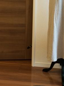 忍びこむ猫