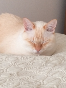 瞑想する猫
