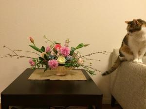 花にロックオンする猫