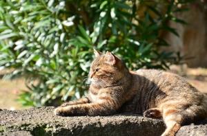 千光公園の猫
