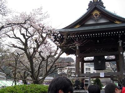 桜と鐘付き堂