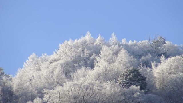 陽光を受けた霧氷が美しい
