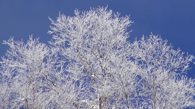 霧氷は青空を背景にすると際立つ