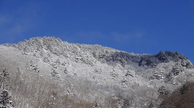 丸笹山を見上げた