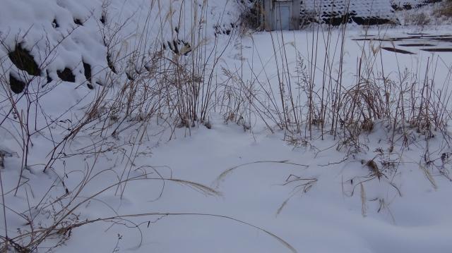 雪原というには積雪が不足