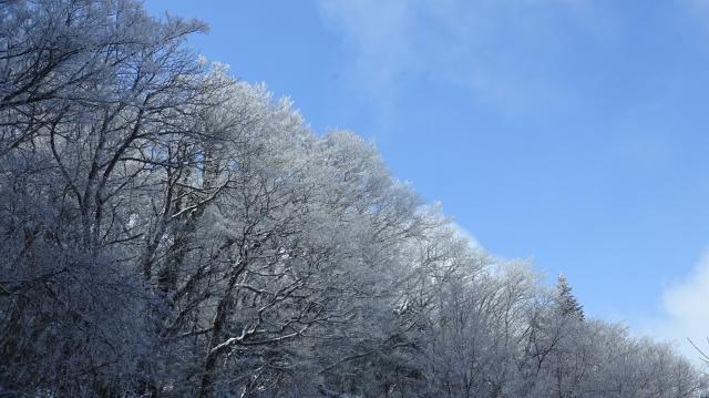 霧氷が白いサクラの花みたい