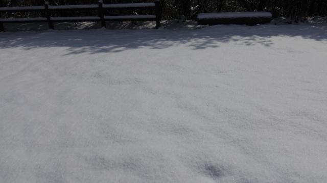 しっかりとした雪原になっている