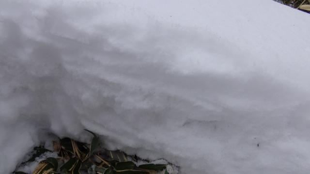 積雪の多層構造を観察